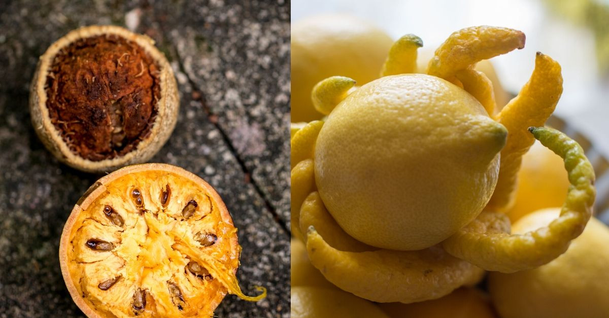 10 Strange Fruits From Around the World
