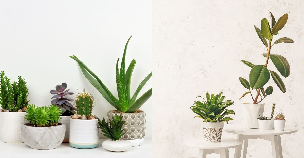 8 Easy Care Houseplants To Green-ify Your Space In Malaysia