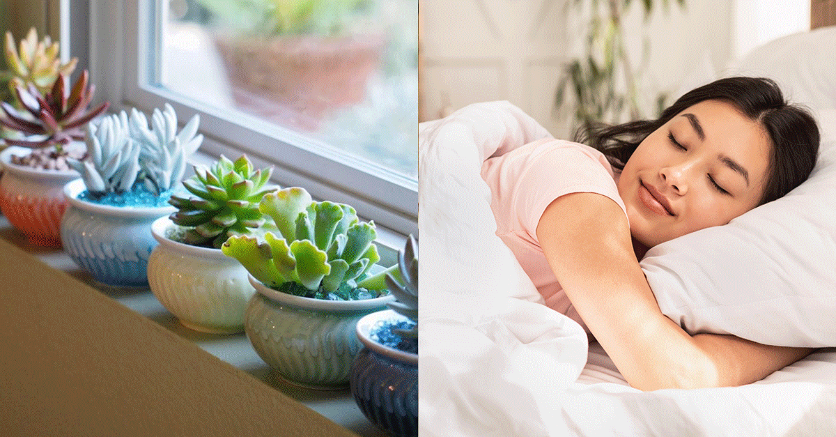 8 Benefits You Can Get From Having Succulents At Home